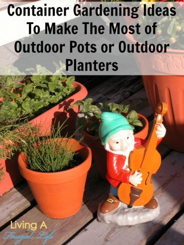 Container Gardening Ideas To Make The Most of Your Outdoor Pots and Planters