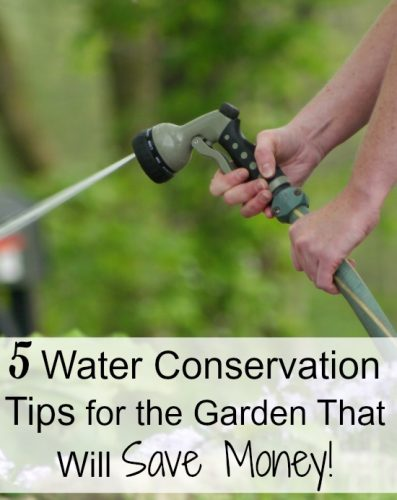 5 Water Conservation Tips for the Garden That Will Save Money