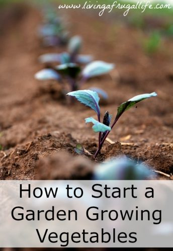 How to Start a Garden Growing Vegetables